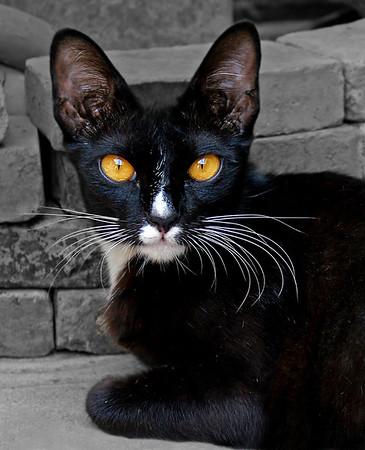 Black Cat - Phil Burrows