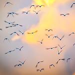 In Flight - Ray Ross