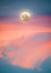 Rise Above - Robert Woodbury