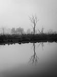 Lone Sentinel - Kim McAvoy