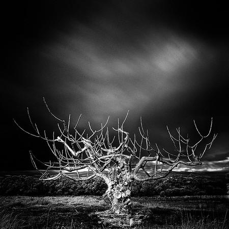 Portrait of a Tree - Robert Woodbury
