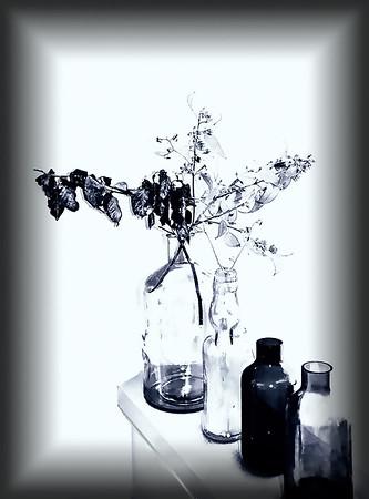 Bottle Collection - Dita Hagedorn