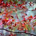 Autumn Blues - Galina Romalis