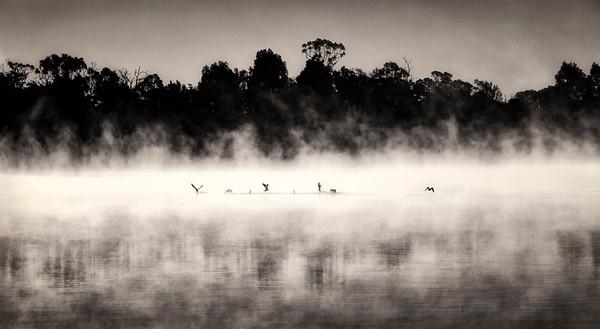 Ducks in the Mist - Jocelyn Manning