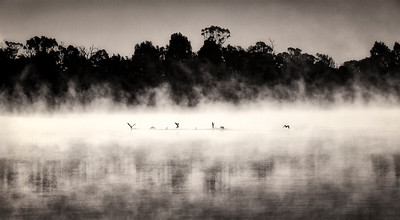 Ducks in the Mist - Jocelyn Manning