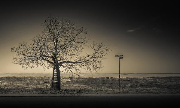 Boab Tree - Lemuel Tan