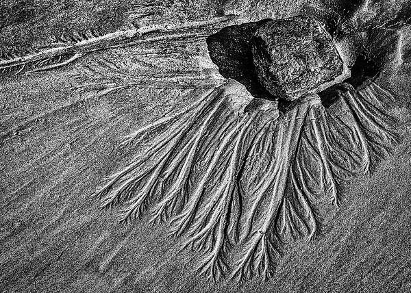 Sand Patterns - Susan Moss