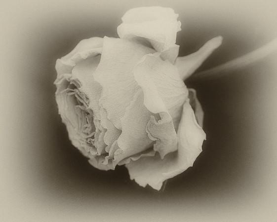 Faded Beauty - Ann Jones