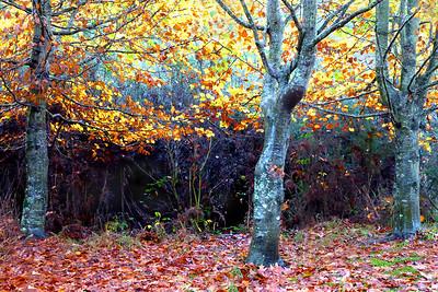 Autumn Colours - Phil Burrows
