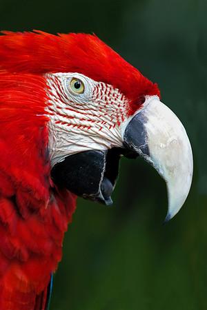 Angry Bird - Phil Burrows
