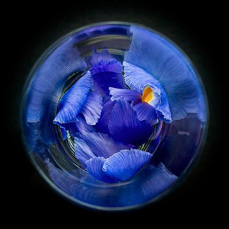 Iris in a Spin - Richard Kujda