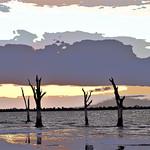 Painted Stumps - Ann Jones