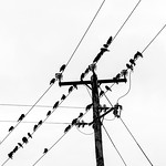 Blackbird Junction - Ann Jones