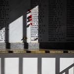 Shadow of Death - Ann Jones