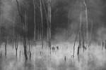Misty - Cecylia Sylwestrzak