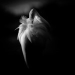 Feathers - Russell Donkin