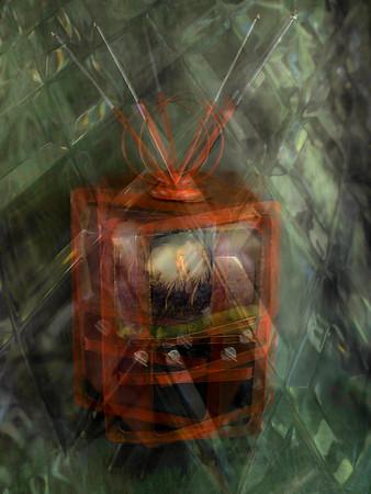 Swamp Vision - Richard Goodwin
