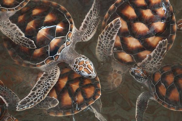 Turtles - Cec Sylwestrzak