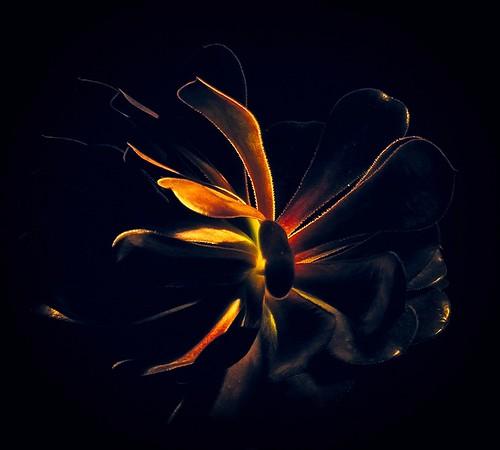 After Glow - Ron Dullard
