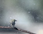 Winter is Coming - Ron Dullard