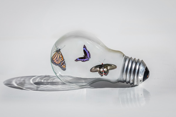 Butterfly Bulb - Susi Nodding