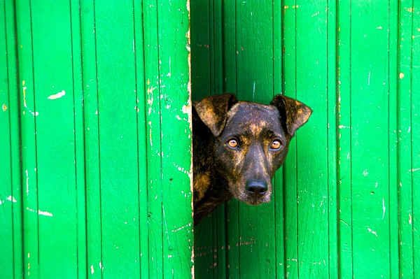 What's Behind the Green Door - Alister Munro