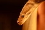 Python - Munib Fetahovic