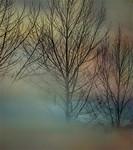Misty Midland - Richard Goodwin