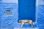 Blue Dog - Alister Munro