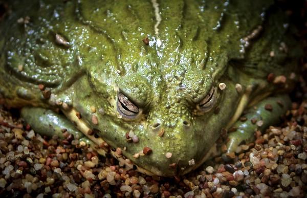 Sleepy Toad - Steve Brown