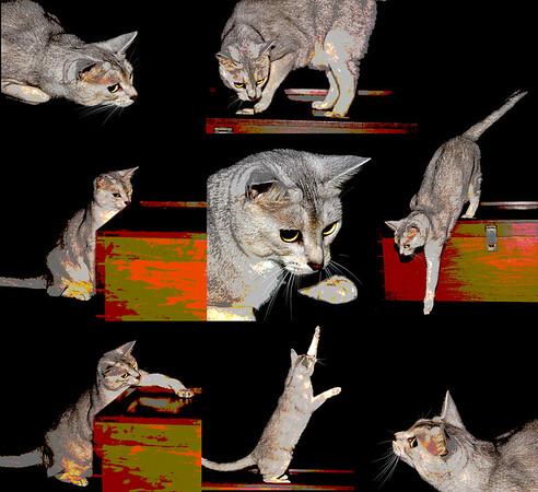 Kitty Cube - Michele Augustyn