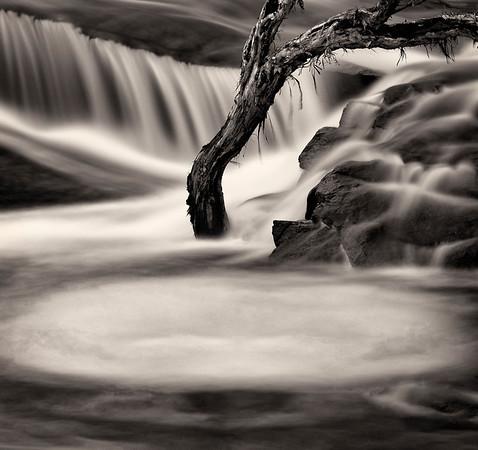 Paperbark Tree - Jocelyn Manning