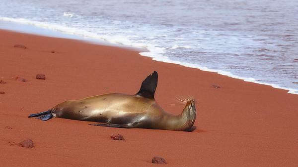 Relaxing on the Beach - Steve Crossley