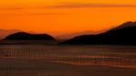 Orange Glow - Russell Donkin