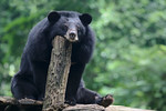 Big Black Bored Bear - Steve Crossley