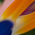 Floral Abstract - Ann Jones