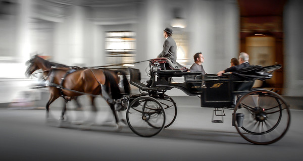 Viennese Horse and Carriage - Steve Brown