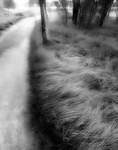Grass Tree Track - Greg Bilton