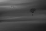 Last Tree Standing - Susi Nodding