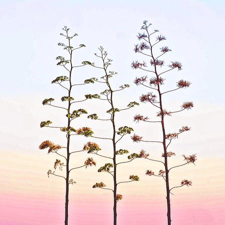 Sunset - Ron Dullard
