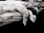 Driftwood - Greg Bilton