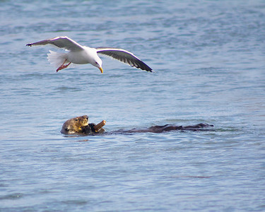 Otter and Gull