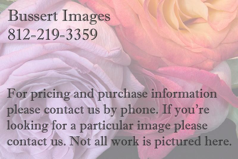 20080301-1908-Three Roses-smugmug contact card