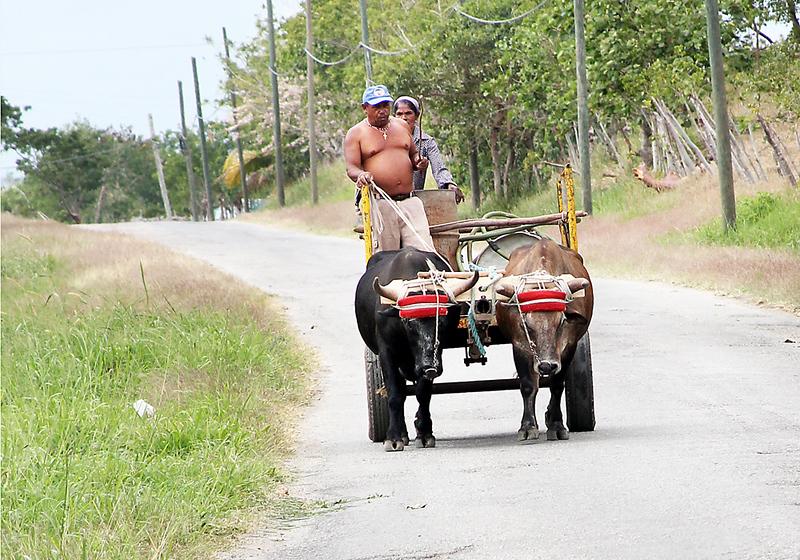 Ox Cart-8783
