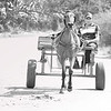 20190118-8800-BW Horse Cart-Low Res