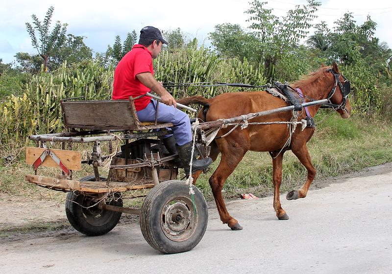 Horse Cart-8784