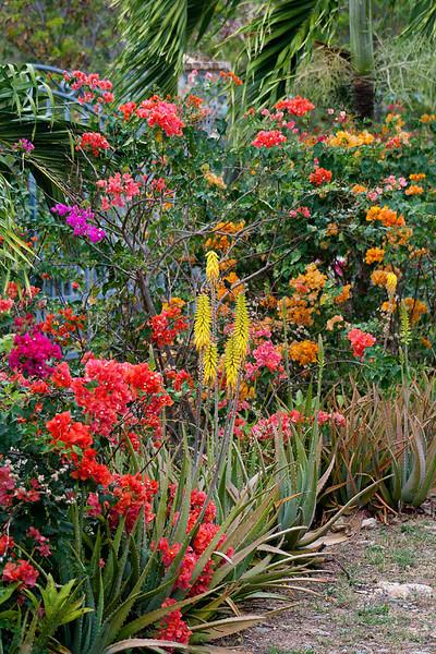 20120216-9675 Flower Garden low res