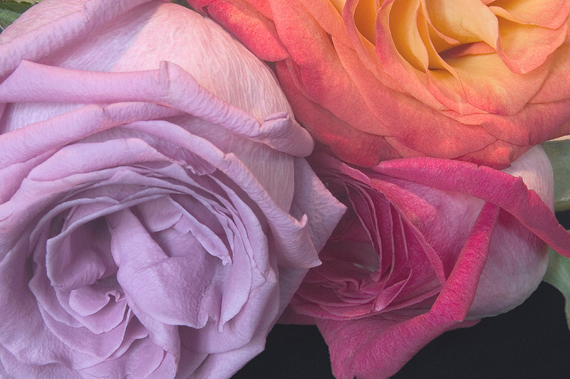 20080301-1908-Three Roses-low res