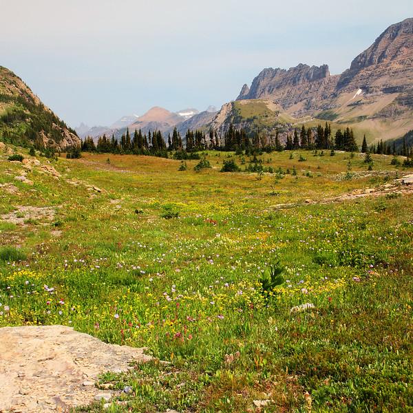 Wildflowers in the Rockies