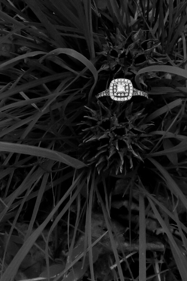 View More: http://belloestudio.pass.us/oakwood-engagement